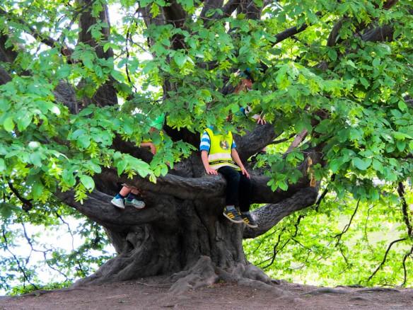 Bambini sull'albero - Stoccolma, Svezia - Giugno 2014